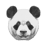 Original Drawing of Panda Isolated on White Background