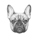 Original Drawing of French Bulldog Isolated on White Background