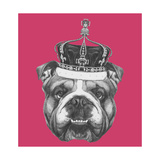 Original Drawing of English Bulldog with Crown Isolated on Colored Background