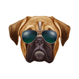 Original Drawing of Boxer Dog with Sunglasses Isolated on White Background