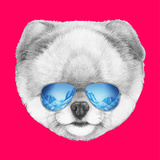 Portrait of Pomeranian with Mirror Sunglasses Hand Drawn Illustration