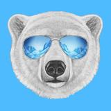 Portrait of Polar Bear with Mirror Sunglasses Hand Drawn Illustration