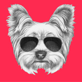 Portrait of Yorkshire Terrier Dog with Sunglasses Hand Drawn Illustration