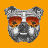 Original Drawing of English Bulldog with Mirror Sunglasses Isolated on Colored Background