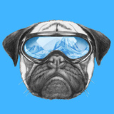 Portrait of Pug Dog with Ski Goggles Hand Drawn Illustration