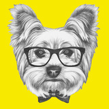Portrait of Yorkshire Terrier Dog with Glasses and Bow Tie Hand Drawn Illustration