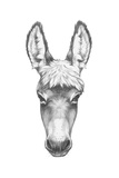 Portrait of Donkey Hand Drawn Illustration