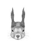 Portrait of Squirrel Hand Drawn Illustration