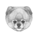 Original Drawing of Pomerania Isolated on White Background