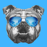 Portrait of English Bulldog Mirror Sunglasses Hand Drawn Illustration