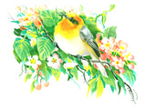 Songbird  Warbler