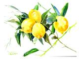 Lemon Bunch