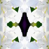 Wedding Iris