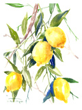 Lemon Bunch 2