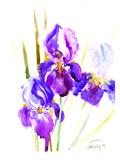 Irises (2)