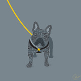French Bulldog on Grey