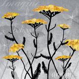 Yarrow Blooms