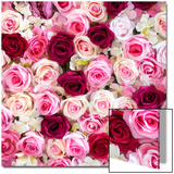 China 10MKm2 Collection - 1001 Roses