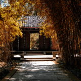 China 10MKm2 Collection - Bamboo Forest in Autumn