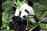 China 10MKm2 Collection - Giant Panda