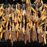 China 10MKm2 Collection - Corn Drying