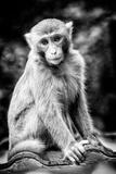 China 10MKm2 Collection - Monkey Portrait