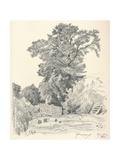 Study of Trees  C1839-1898  (1898)