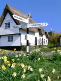Daffodils  Road Sign and Cottage  Thriplow  Cambridgeshire