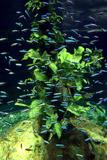 Aquarium  Loro Parque  Tenerife  Canary Islands  2007