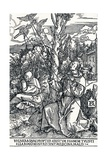 St Francis Receiving the Stigmata  1504