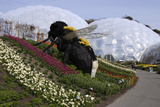 Giant Bumble Bee Sculpture  Eden Project  Near St Austell  Cornwall