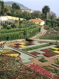 Botanical Gardens  Funchal  Madeira  Portugal