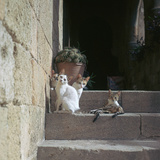 Kittens in Rhodes Old Town