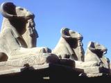 Ram-Headed Sphinxes  Temple of Amun  Karnak  Egypt