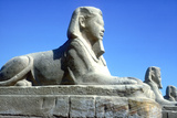 A Sphinx from the Avenue of Sphinxes  Temple Sacred to Amun Mut and Khons  Luxor  Egypt  C370 Bc