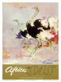 Africa - African Ostriches - SAS Scandinavian Airlines System