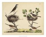 Wrens  Warblers & Nests I