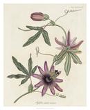 Lavender Blooms II