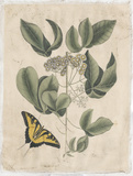 Embellished Catesby Butterfly & Botanical II