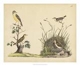 Wrens  Warblers & Nests II