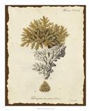 Natura Coral III