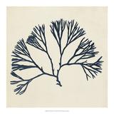 Coastal Seaweed VI