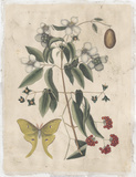 Embellished Catesby Butterfly & Botanical III