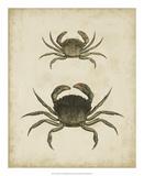 Crustaceans IV
