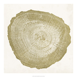 Tree Ring IV