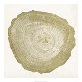 Tree Ring IV Giclée par Vision Studio