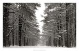A Snowy Walk IV