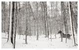 A Snowy Walk II