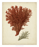 Antique Red Coral V