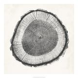 Tree Ring II Giclée par Vision Studio